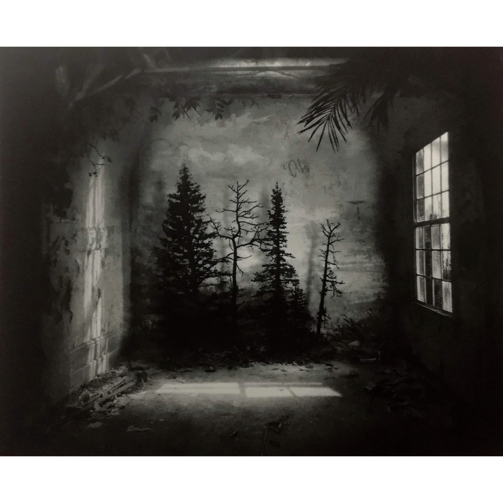 Suzanne Moxhay Room With Pines